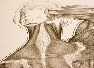Gezeichneter Schultermuskel