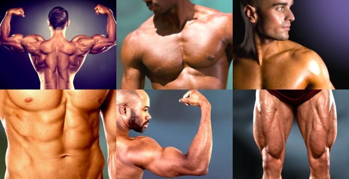 Zu sehen sind einzeln die Muskelgruppen Bauchmuskeln, Armmuskeln, Schultermuskeln, Beinmuskeln, Brustmuskeln und Rückemnuskeln