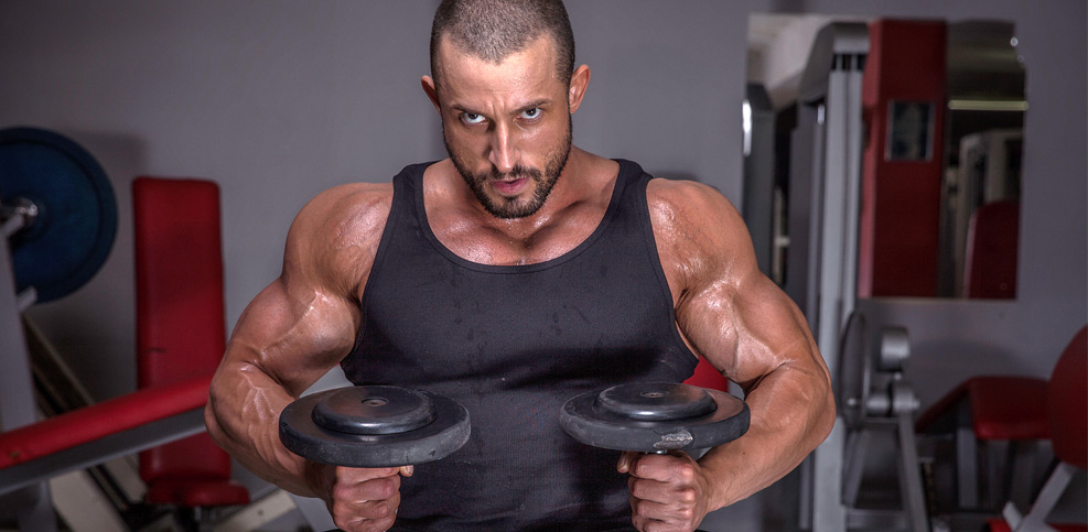Muskulöser Typ